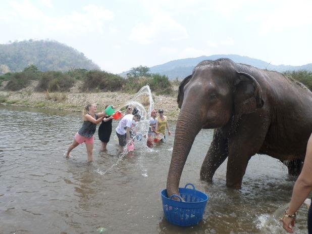 Washing the elephants at the Elephant Nature Park, 25/4/15
