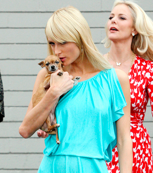 Paris Hilton leaves a studio with her puppy 'Tinkerbell' Los Angeles
