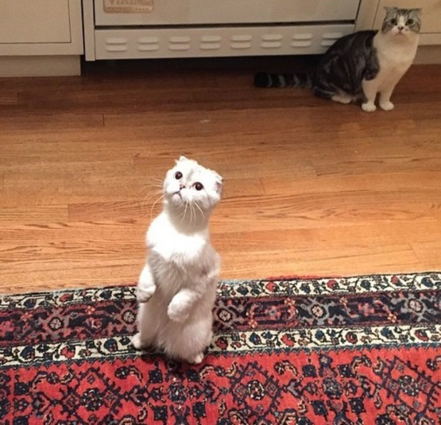 Calvin Harris uploads photo of Taylor Swifts cats to Instagram 29th April 2015