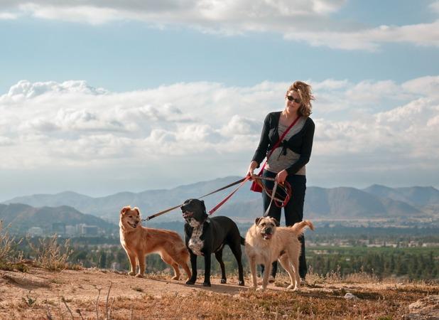 Sara Davis gave up work to walk her dog