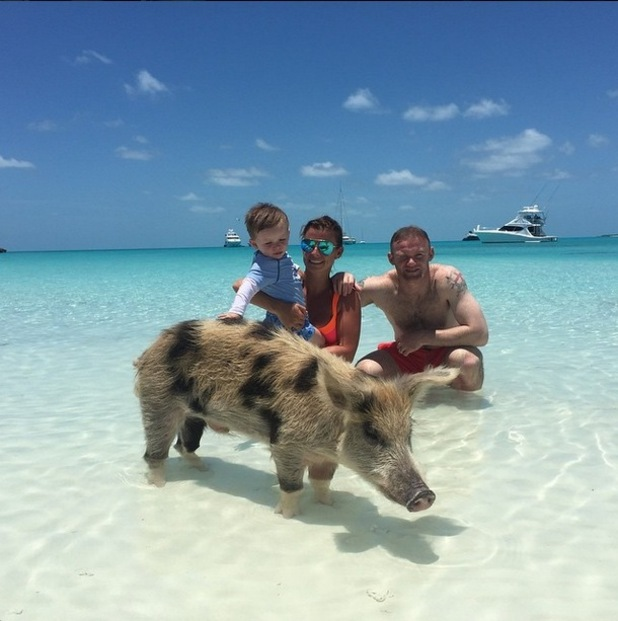 Wayne, Coleen and Klay Rooney are photobombed by a pig in the Bahamas, 1st June 2015