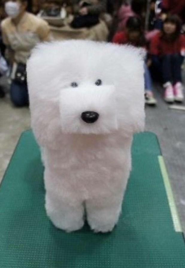 Box-shaped dog white poodle