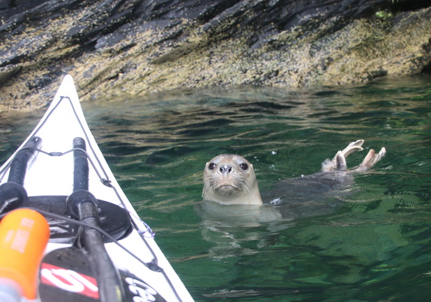Seal-fie - A young seal swims up to kayakers to have his photo taken near the Isle of Man
