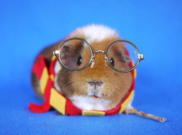 Fuzzberta and MiniGunieaPig - Harry Potter fancy dress