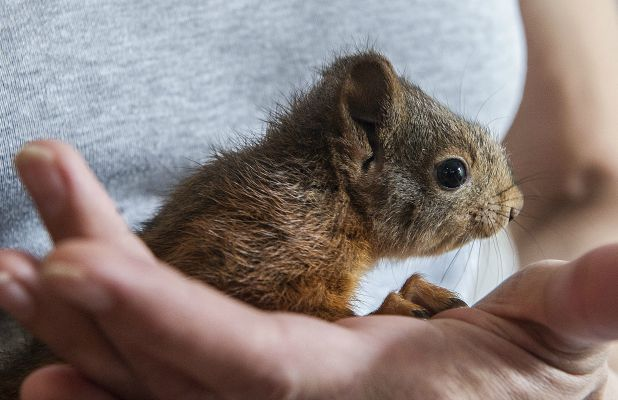 Squirrel 'arrested' for stalking woman is cared for at animal sanctuary, Germany - 22 Jul 2015