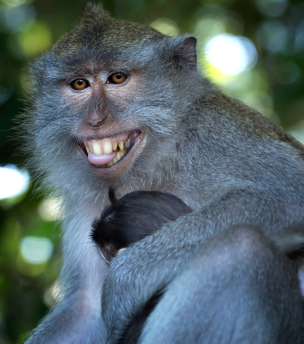 Smiling Monkey Pictures to Pin on Pinterest - PinsDaddy