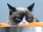 Grumpy Cat looks oh-so-bored (even when getting hugged by WWE Diva!)