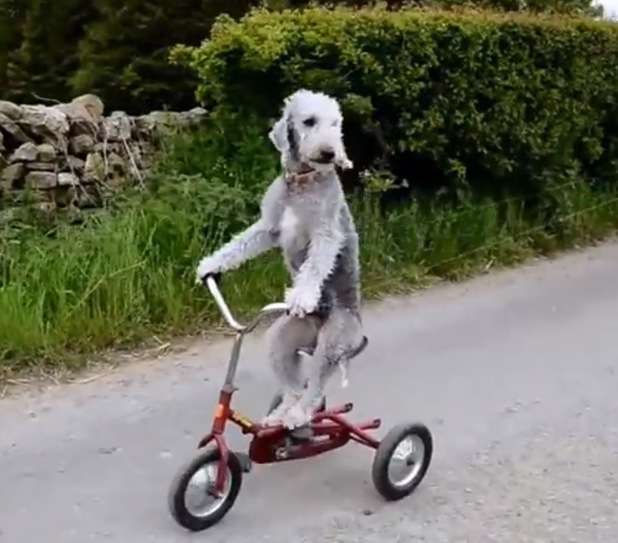 Barry riding his tricycle