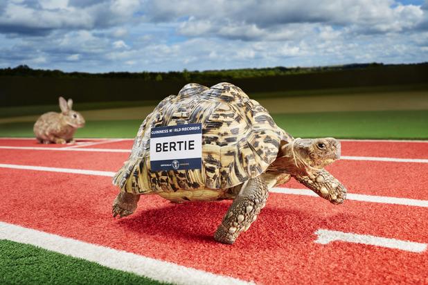 Guinness World Records - Bertie