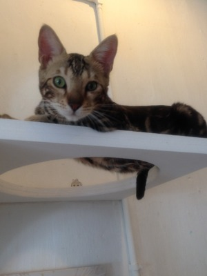 Purrfect cat café, George Town, Penang, Malaydia. 24/9/15