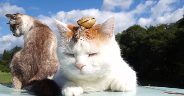 Snail and cats YouTube Video has become an instant hit