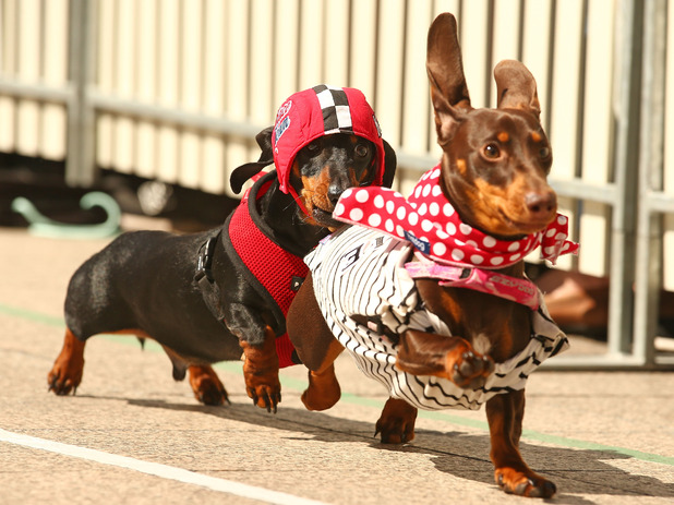 Running of the Wieners - best dressed