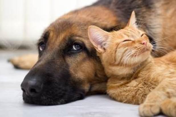VetPlus offer tips for pet owners during bonfire weekend, November 2015