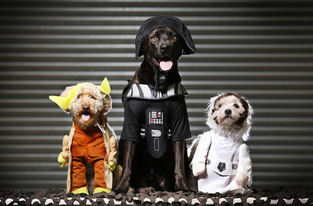 Star Wars costumes for dogs - Yoda, Darth Vader and Princess Leia
