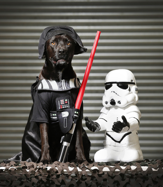Star Wars costumes for dogs - Bark Vader