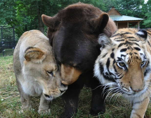 Noah's ark animal sanctuary is home to an unlikely trio of friends