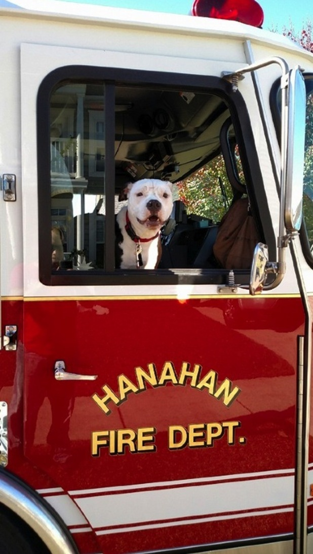 Jake the puppy in a fire engine