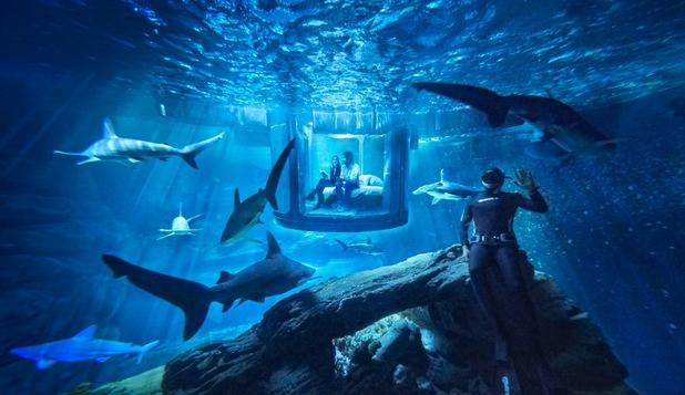 Paris Aquarium is hosting the ultimate Airbnb