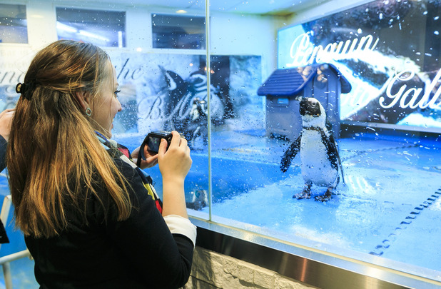 Penguin Bar in Tokyo lets you hang out with penguins and feed them