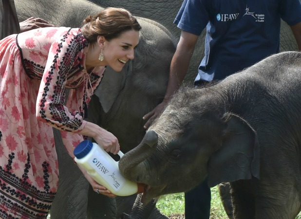 Catherine, Duchess of Cambridge visits the Centre for Wildlife Rehabilitation and Conservation at Kaziranga National Park on April 13, 2016 in Guwahati, India. (Photo by UK Press Pool/Getty Images)