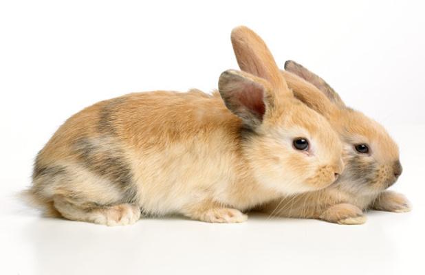 The adorable baby rabbits had a lucky escape