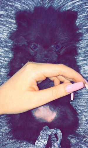 Charlotte Crosby introduces new puppies 15 May