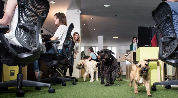 Bring Your Dog To Work Day is on June 24