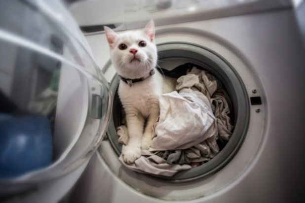Bobby the cat had a lucky escape after getting stuck in the wash when his owner from the Meadows, Nottinghamshire, put the machine on for a spin.
