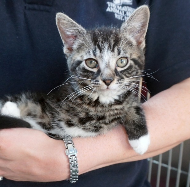 Flintstone the cat is looking for a home!