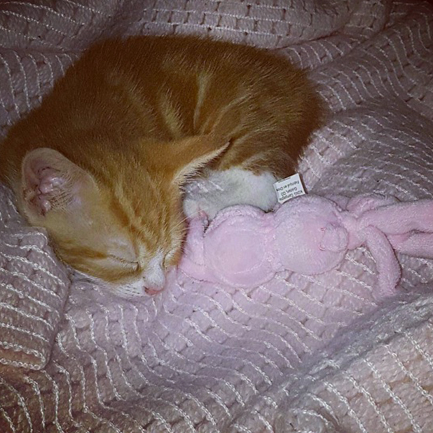Emma-Jane Woodhams and Terry Walsh get a kitten named Boo 7 Sept 2016